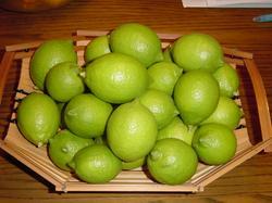 lemon10-30.JPG